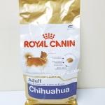 BHN Chihuahua adult สุนัขโตสายพันธ์ชิวาวา 1.5 kg. Exp.07/19