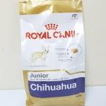 BHN Chihuahua junior 1.5 kg. ลูกสุนัขสายพันธ์ชิวาวา Exp.07/19