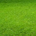หญ้าเทียมสีธรรมชาติ สูง 4.5 มิลลิเมตร ราคาขายต่อมิลลิเมตร