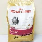 FBN Kitten Persian ลูกแมว 4 เดือน ถึง 12 เดือน ขนาด 4 kg. Exp.3/18
