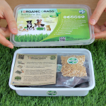 วิธีการปลูกต้นข้าวสาลีอ่อน (How to Grow Wheatgrass) มีภาพประกอบ