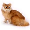 ตุ๊กตาเหมือนจริง สุนัขจิ้งจอก ขนาด 35x28x26cm (Pre Order)