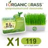 i Organic Grass ชุดปลูกข้าวสาลี สำหรับสัตว์เลี้ยง