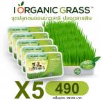 ชุดปลูกข้าวสาลี i Organic Grass x 5