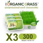 ชุดปลูกข้าวสาลี i Organic Grass x 3