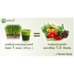 ดื่มน้ำวีทกราสคั้นสด เท่ากับกินผัก 1.5 กิโลกรัม