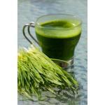 น้ำวีทกราส น้ำคั้นเพื่อสุขภาพจากต้นอ่อนข้าวสาลี