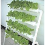 ชุดปลูกผักไฮโดรโปรนิกส์สำเร็จรูป
