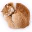 ตุ๊กตาเหมือนจริง แมวสีน้ำตาลนอนหลับ ขนาด 25x20x11cm (Pre Order) thumbnail 5