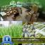 i Organic Grass™ ชุดปลูกข้าวสาลี สำหรับสัตว์เลี้ยง thumbnail 22