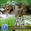 i Organic Grass ชุดปลูกข้าวสาลี สำหรับสัตว์เลี้ยง Pro 2017 thumbnail 22