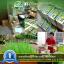 i Organic Grass™ ชุดปลูกข้าวสาลี สำหรับสัตว์เลี้ยง thumbnail 21