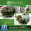 i Organic Grass ชุดปลูกข้าวสาลี สำหรับสัตว์เลี้ยง Pro 2017 thumbnail 13