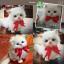 แมวเปอร์เซีย ผูกโบว์แดง ขนาด 16x10x17cm (Pre Order) thumbnail 9