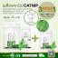 Catnip Seeds (Nepeta Cataria) เมล็ดแคทนิป สำหรับแมว thumbnail 2