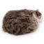 ตุ๊กตาเหมือนจริง แมวสีน้ำตาลเข้มลายเสือนอนหลับ ขนาด 27x20x6cm (Pre Order) thumbnail 2