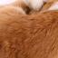 ตุ๊กตาเหมือนจริง แมวสีน้ำตาลนอนหลับ ขนาด 25x20x11cm (Pre Order) thumbnail 7