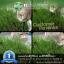 i Organic Grass™ ชุดปลูกข้าวสาลี สำหรับสัตว์เลี้ยง thumbnail 15