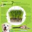 i Organic Grass ชุดปลูกข้าวสาลี สำหรับสัตว์เลี้ยง Pro 2017 thumbnail 6