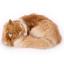 ตุ๊กตาเหมือนจริง แมวสีน้ำตาลนอนหลับ ขนาด 25x20x11cm (Pre Order) thumbnail 1