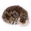 ตุ๊กตาเหมือนจริง แมวสีน้ำตาลเข้มลายเสือนอนหลับ ขนาด 27x20x6cm (Pre Order) thumbnail 6