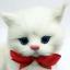 แมวเปอร์เซีย ผูกโบว์แดง ขนาด 16x10x17cm (Pre Order) thumbnail 5