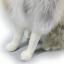 ตุ๊กตาเหมือนจริง หมาป่า ขนาด 21x24.5cm (Pre Order) thumbnail 6
