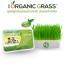 i Organic Grass ชุดปลูกข้าวสาลี สำหรับสัตว์เลี้ยง Pro 2017 thumbnail 1