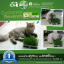 i Organic Grass ชุดปลูกข้าวสาลี สำหรับสัตว์เลี้ยง Pro 2017 thumbnail 14