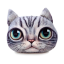 หมอนหน้าน้องแมว 3 มิติ ขนาด 50x40 cm (พร้อมส่ง+Pre) thumbnail 1