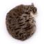 ตุ๊กตาเหมือนจริง แมวสีน้ำตาลเข้มลายเสือนอนหลับ ขนาด 27x20x6cm (Pre Order) thumbnail 3