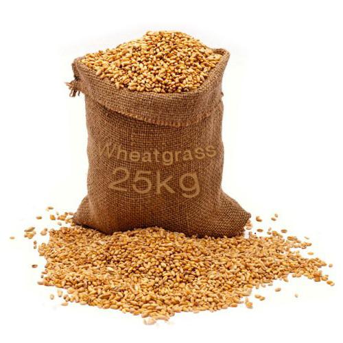 เมล็ดข้าวสาลี นำเข้าคัดพิเศษ ปลอดสารพิษ 1 กระสอบ (25kg)