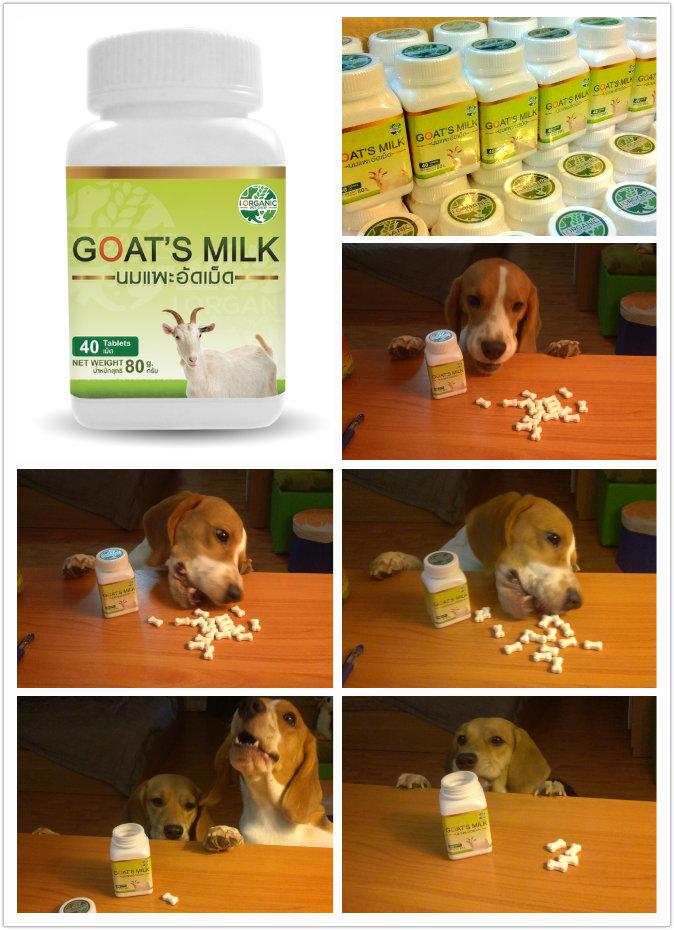 รีวิว นมแพะอัดเม็ด แบรนด์ i Organic Pet Shop