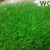 หญ้าเทียมสีธรรมชาติ 30 มิลลิเมตร ราคาต่อตารางเมตร