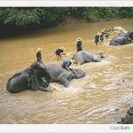 โปสการ์ด ช้างอาบน้ำ /สัตว์ต่างๆ