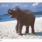 โปสการ์ด ช้างไทย /สัตว์ต่างๆ/ทะเล/ชายหาด