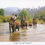 โปสการ์ด ทัวร์นั่งช้าง /สัตว์ต่างๆ