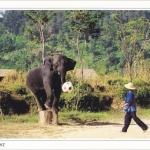 โปสการ์ด ช้างไทยเตะฟุตบอล /สัตว์ต่างๆ