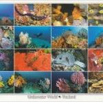 โปสการ์ด โลกใต้ทะเล ใต้ท้องทะเลไทย /ดำน้ำ/สัตว์ต่างๆ/multiview