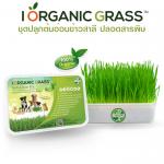 i Organic Grass ชุดปลูกข้าวสาลี สำหรับสัตว์เลี้ยง Pro2018