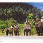 โปสการ์ด ช้างไทย /สัตว์ต่างๆ