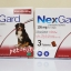 NexGard dogs 25-50 kg. Exp.09/20 จำนวน 2 กล่อง