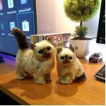 แมวเปอร์เซีย แมวจำลองเหมือนจริง (งานแฮนเมด) พร้อมส่ง!