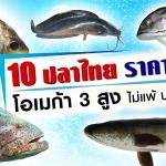 10 ปลาไทยราคาบ้านๆ โอเมก้า 3 สูง ไม่แพ้ปลาแซลมอน