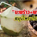 """""""มะพร้าวกับพริกไทย"""" สมุนไพรแก้ปวดหลัง ดื่มแล้วหาย"""