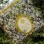 ถุงเบเกอรี่ ถุงขนมปัง แบบมีเทปกาว รูปดอกไม้ 100 ใบ/ห่อ (10*10+3 cm.) thumbnail 1